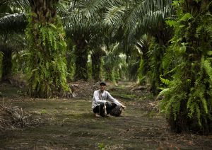 Indonesia Palm Oil Plantation Worker Deforestation