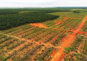 Indonesia Deforestation Palm Oil Plantation Rainforest
